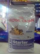 Royal Canin Maxi Starter Mother & Babydog Dog Food