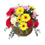 Basket of 25 Carnations N Gerberas - 174